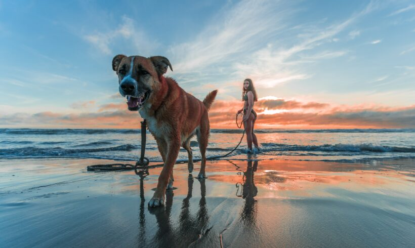 Wakacje z psem – co warto o nich wiedzieć?