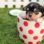 Jak się przygotować do opieki nad psem?